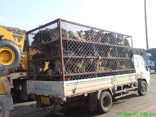 dogs in lorry being taken to market to be slaughtered for human consumption