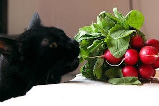 vegetarian cat