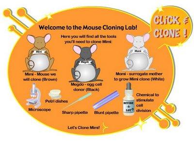Learn Genetics: Cloning - The Biology Corner