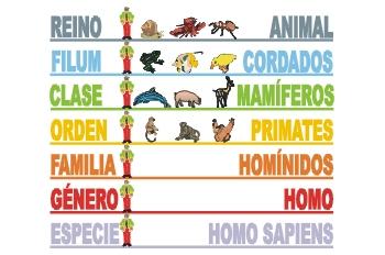 http://2.bp.blogspot.com/_Lmi7sp_UmxY/TNrz3mBxnfI/AAAAAAAAADo/kgI2qU2DNWo/s1600/taxonomia.jpg