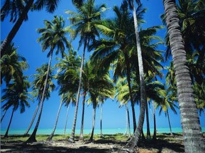 Foto de Praia em Maragogi - Alagoas