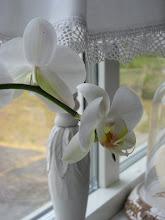 Orkidèer...