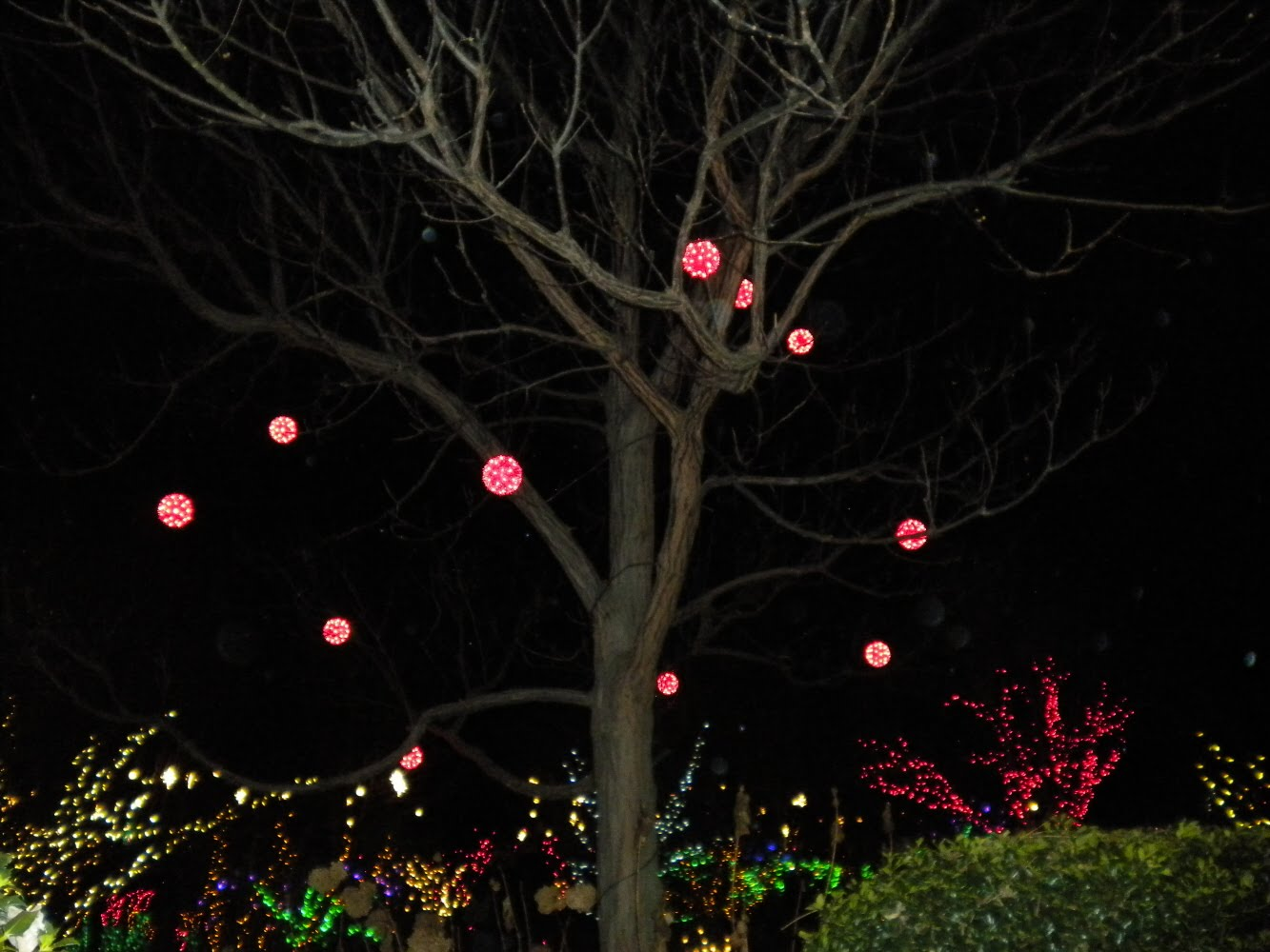 sherris jubilee daniel stowe botanical garden with christmas lights - Christmas Light Balls For Trees