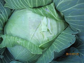 private pesticide applicator practice test