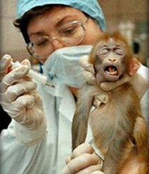 Animal Testing...So not fair!