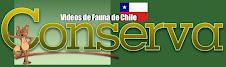 videos de fauna chilena