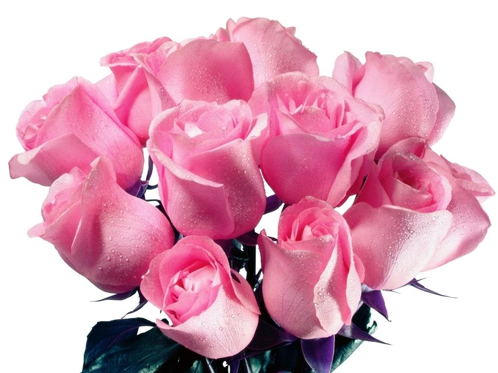 ZOOM FRASES: corazones de amor con peluches,ositos y