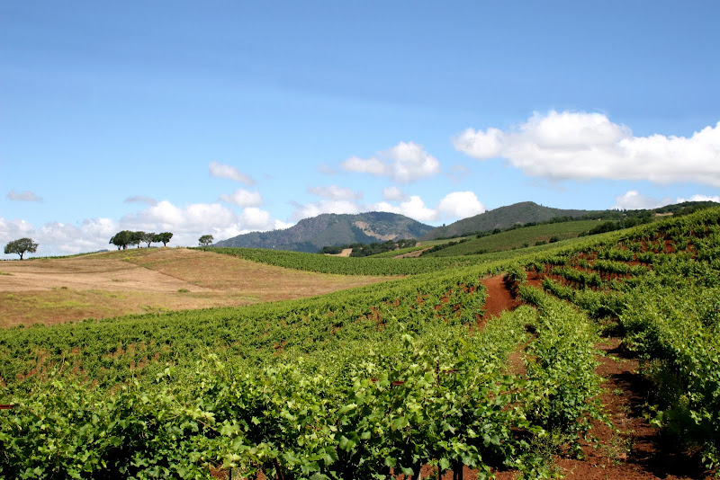 landscape photo of rolling hills with vineyards