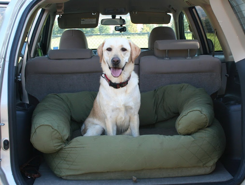 cabana smiling while sitting on her green dog bed in the back of the car with door open, her bed has a channeled bolster around three edges, making it a bit like a mini couch
