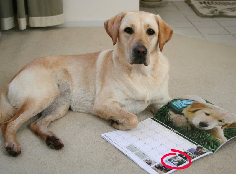 cabana laying on the floor with the GDB calendar in front of her, opened to the May page