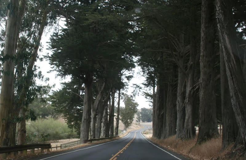 two lane road flanked by a grove of redwoods on both sides