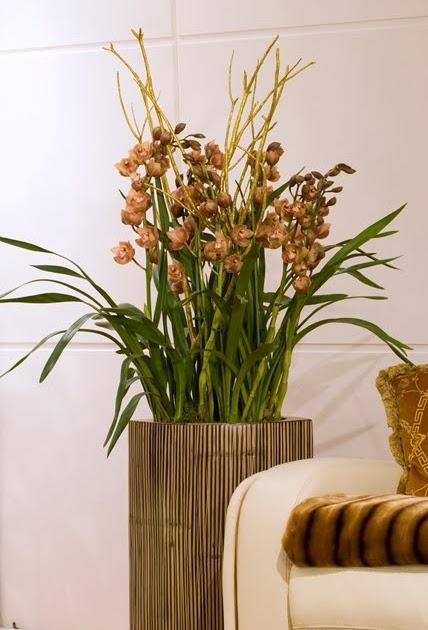 Fiorista mariangela il cymbidium da vaso fiorito - Orchidea da esterno cymbidium ...