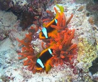 0112  bawah+laut+di+selat+pantar Selat Pantar, Taman Laut Terindah Setelah Karibia
