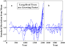 Long-lived Trees are Growing Faster