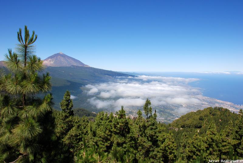 39 Tenerife