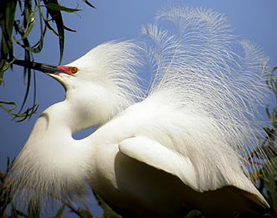 Albinism in birds is rare