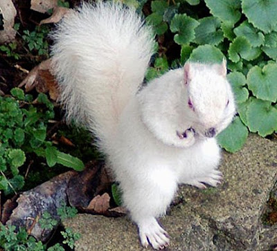 "Known as the ""White Squirrel Capital of the World"
