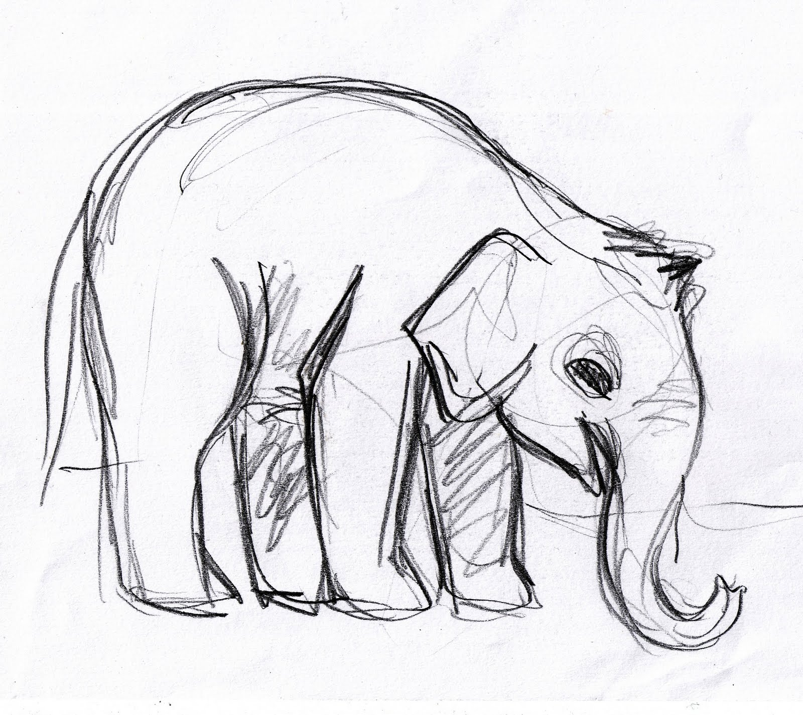 Elephant drawings pinterest