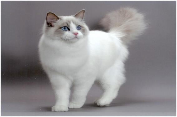 Berbagai Jenis Kucing Yonghyun