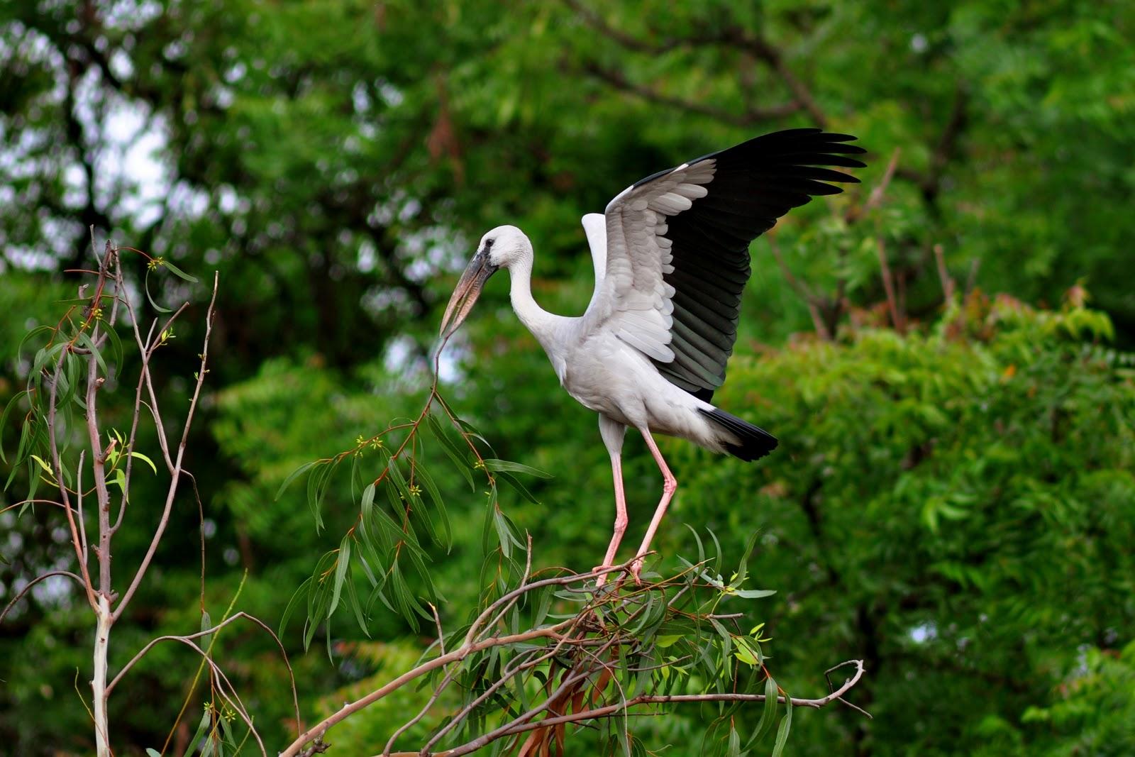 stork Teenage Lesbian Chat,