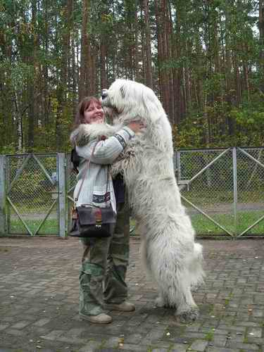 Pero estos perros son bien primitivos y de carácter muy independiente