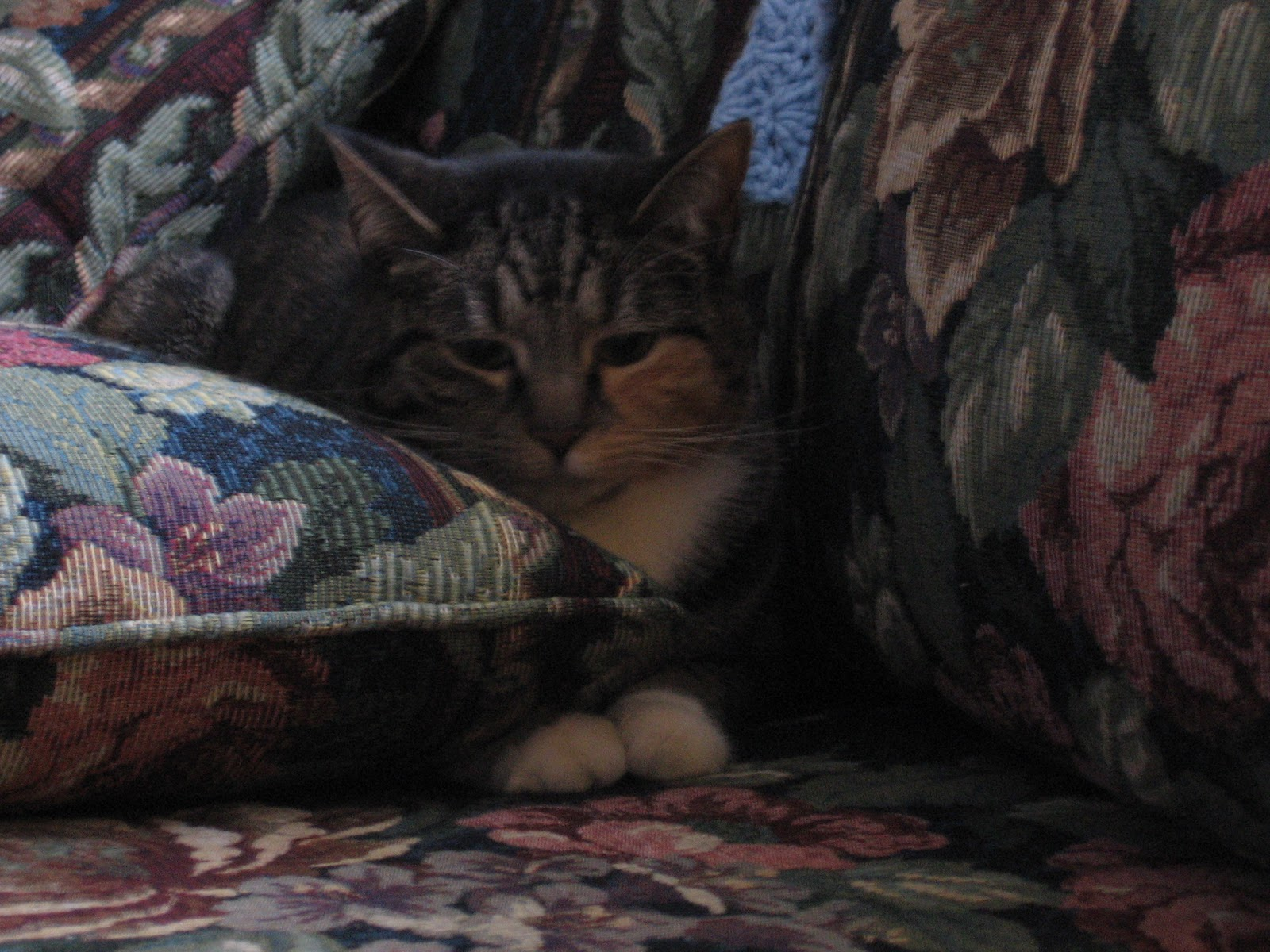 http://2.bp.blogspot.com/_M0tISDkTWTw/TUyYW8OBNFI/AAAAAAAAAVU/SxvYxbvs3gs/s1600/bunny+on+couch.JPG