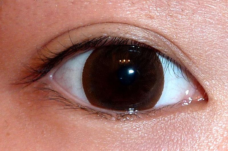 The Makeup Piggy : Circle Lens Review - EOS V102-L Brown