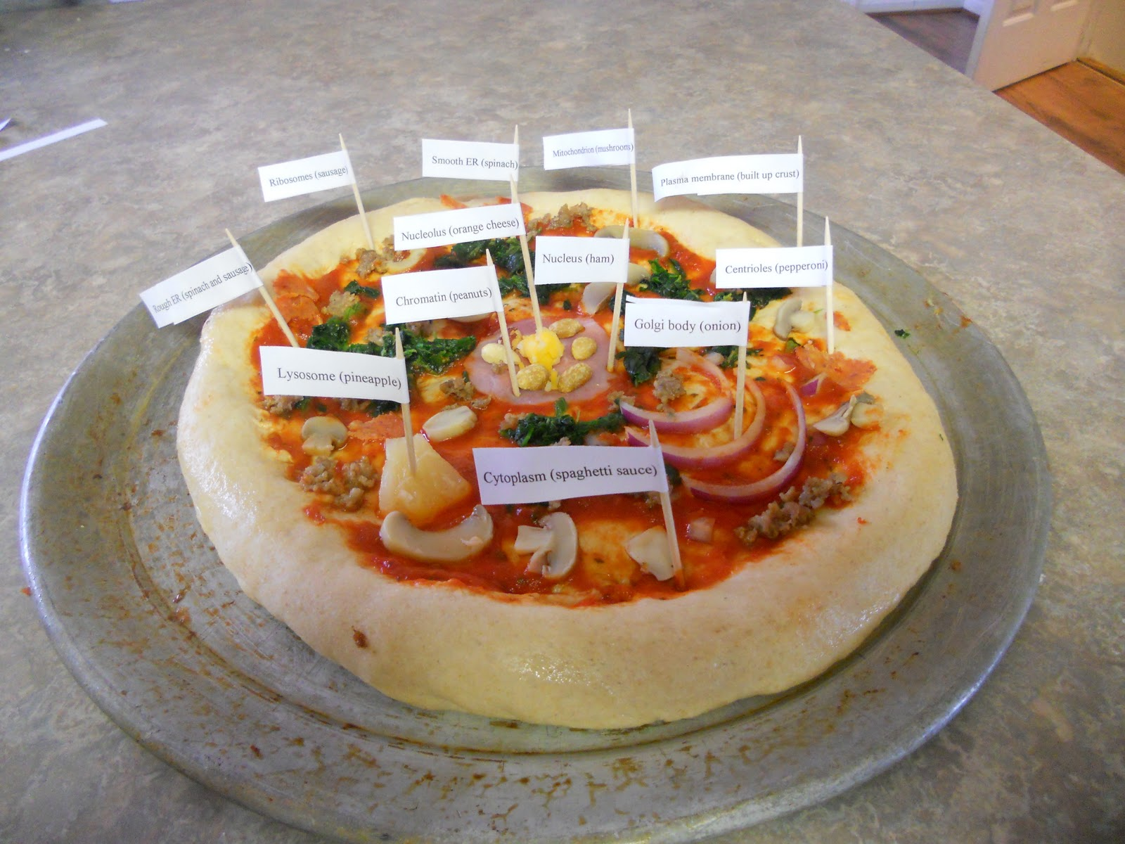 Animal Cell School Project Ideas http://nonniesnotes.blogspot.com/2010/12/pizza-animal-cell-model.html