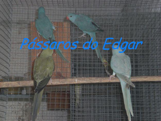 Passaros do Edgar