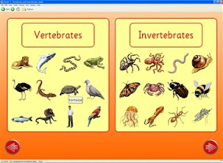 Science 5th grade Primary: Vertebrate and Invertebrate Animals