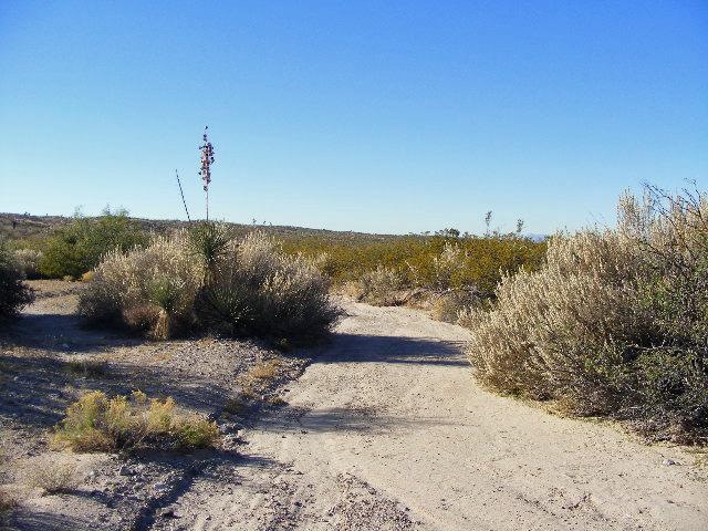 Desert Packrat: What Is An Arroyo?