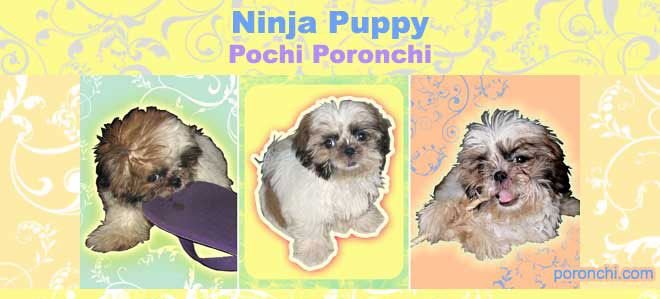 Pochi Poronchi Ninja Puppy
