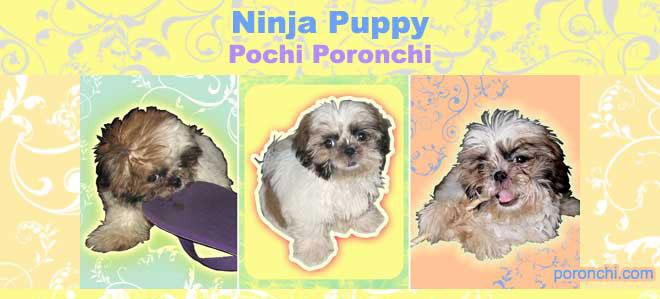Pochi Poronchi Ninja Puppy