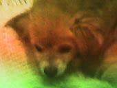 Nunca te esquecerei meu cãozinho,,,