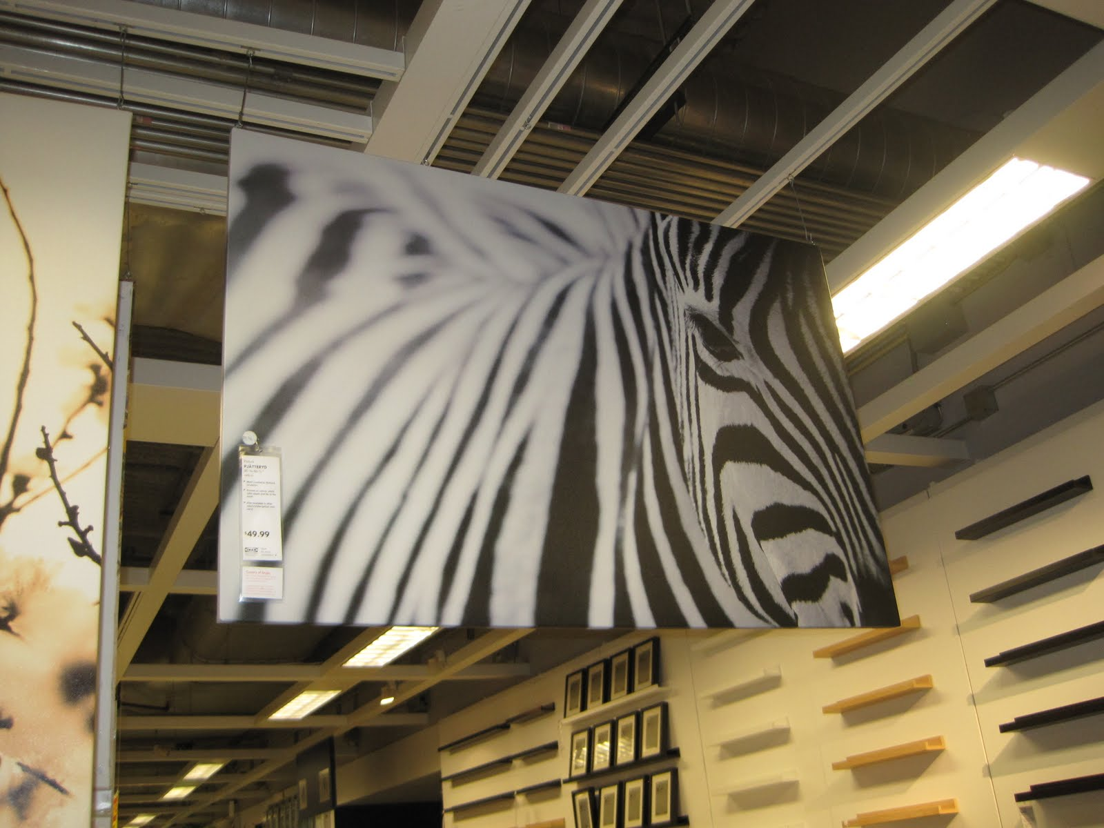 pics for zebra painting ikea. Black Bedroom Furniture Sets. Home Design Ideas