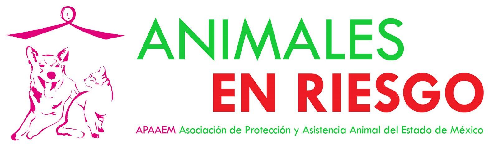 Animales en riesgo