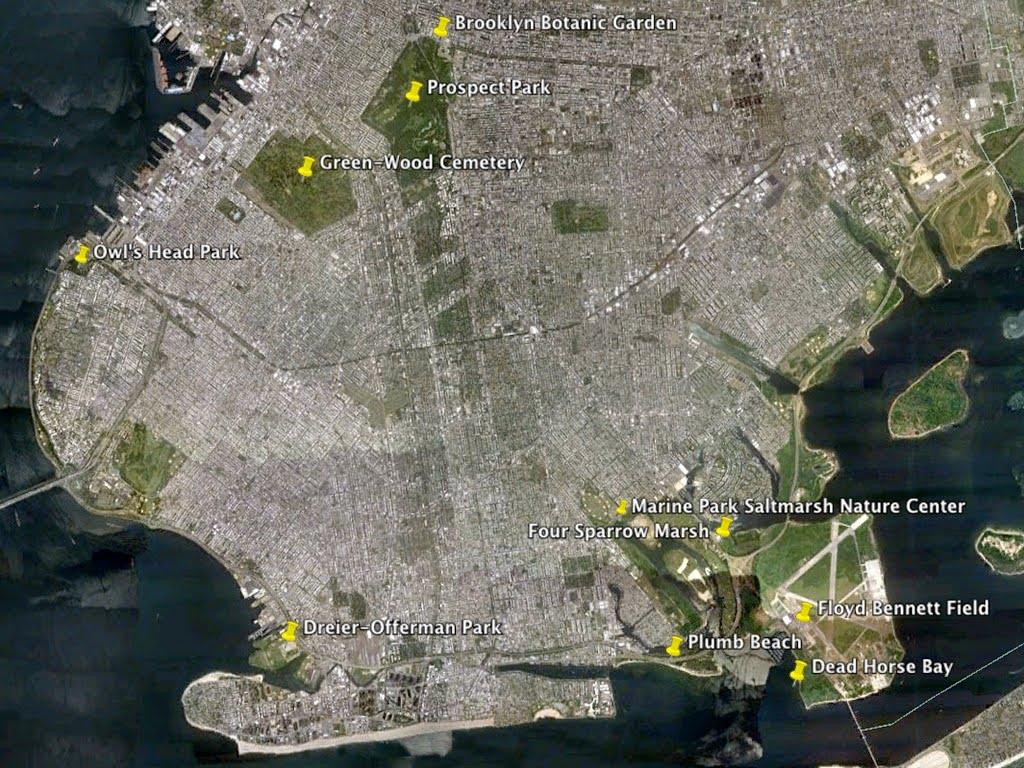 The City Birder Birding Maps