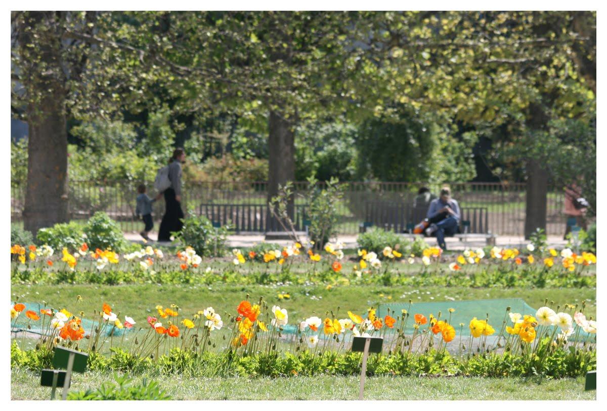 Cergipontin jardin des plantes paris 5 me les carr s de la perspective - Le jardin des plantes paris ...