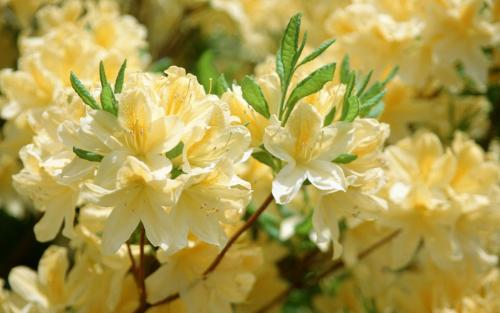 [flori+1]