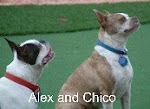 Alexander and Chico