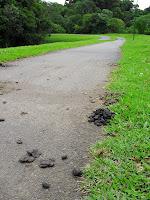 Cocô de pato no parque Tingui :-)