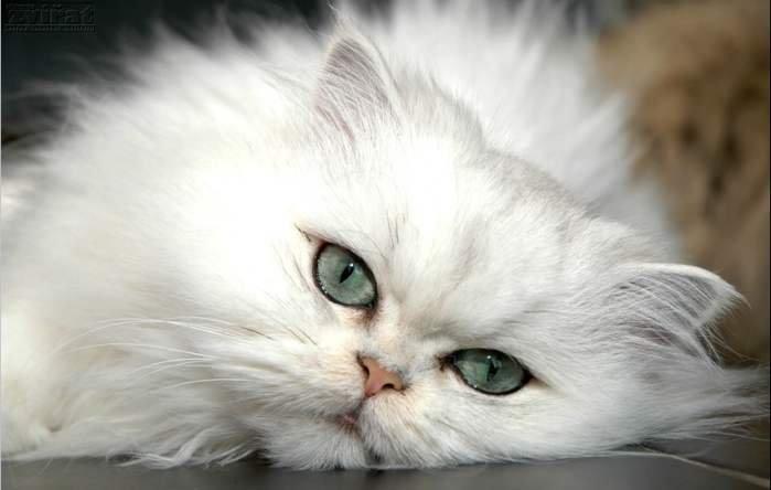 CUTE CAT INSIDE BUCKET cute pinky cat