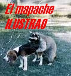 El Mapache ilustrao