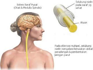 obat alami ejakulasi dini