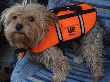 Paddy with life jacket!