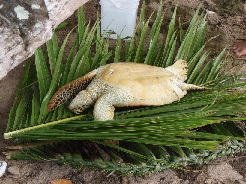 Y Wont My Turtle Eat An Island Adventure: W...