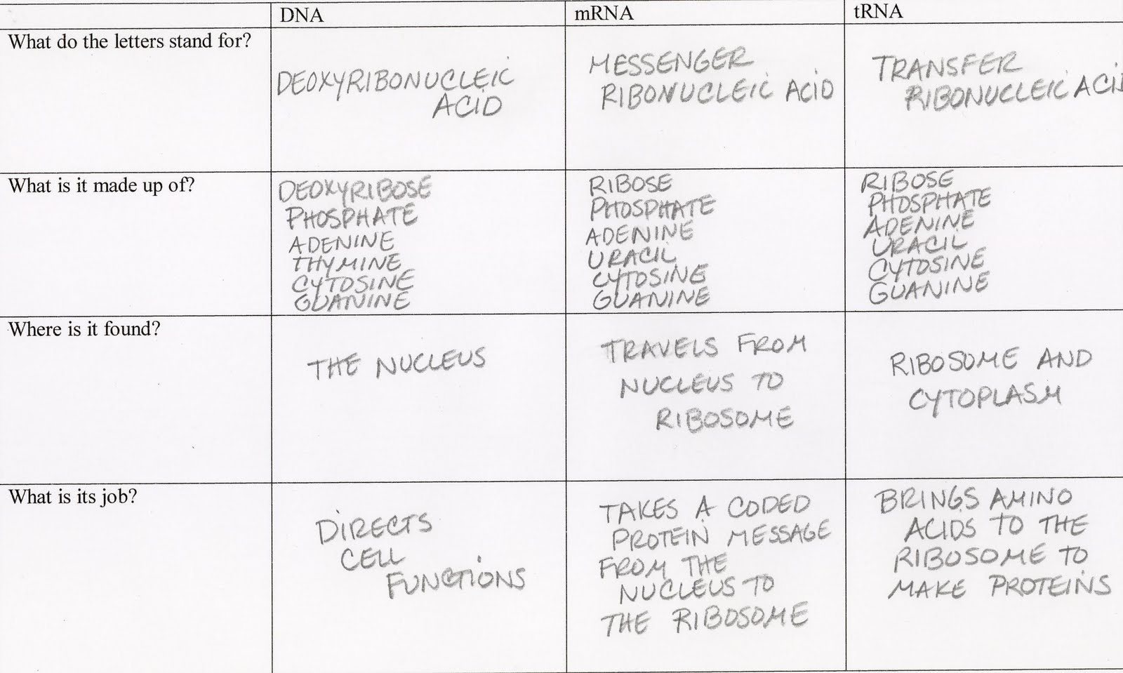 Science Tutor Protein Synthesis Graphic Organizer Storyboarding – Protein Synthesis Worksheet Answer Key