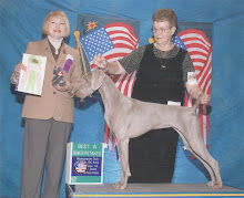 Peach  at Dog Show