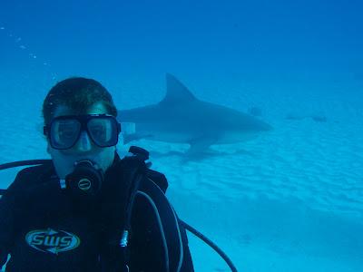 bull shark eating. ull shark eating. dove with
