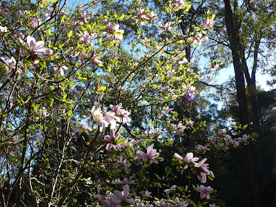 how to get to araluen botanic park